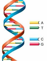 DNA - The Double Helix that is the basic building block of life on Earth