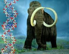 The Woolly Mammoth roamed Siberia and North America throughout the Pleistocene only to go extinct 10,000 years ago. As permafrost melts because of a warming planet the remains of these creatures have led scientists to consider recreating the species.