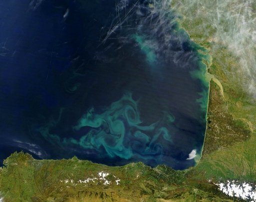 In this satellite picture algae blooms of phytoplankton appear as blue and green swirls in the water off the coast of Northern Spain and Western France.   Source: AFP/NASA