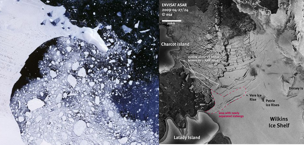 Larsen B and Wilins ice shelf collapse
