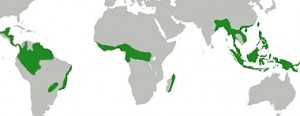 Distribution of tropical rainforests