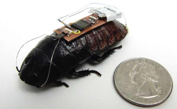 Madagascar Hissing Cockroach Biobot