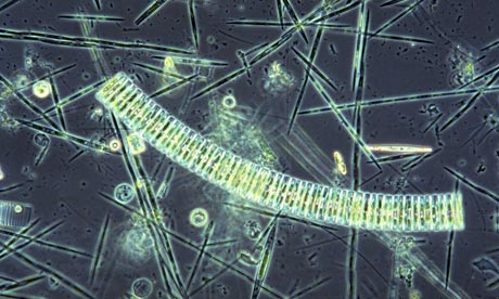 iron-fertilization-ocean-phytoplankton-blooms
