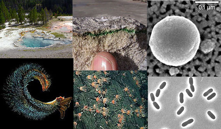 Examples of extremophiles