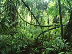 rainforest1-1024x768