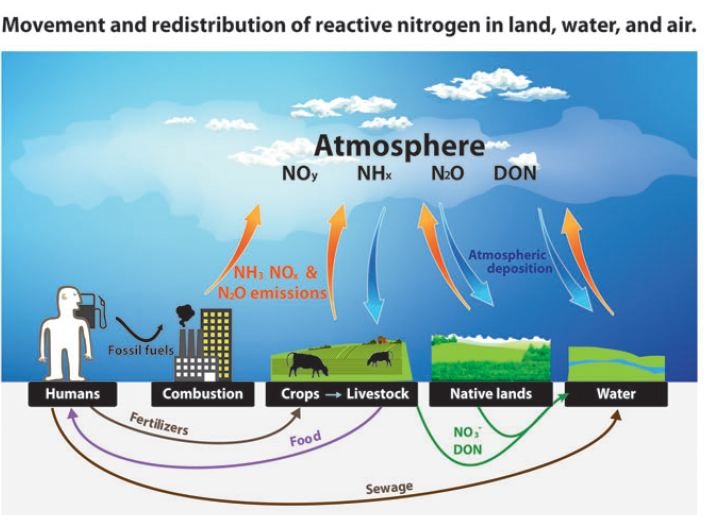 impact of nitrogen on carbon stocks Impacts of land use change in soil carbon and nitrogen in a regional-scale information about c stocks and impacts of land use change in soil carbon and.