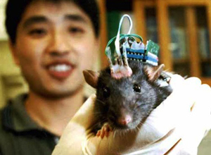rat-chip