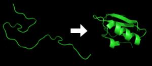 Protein_folding