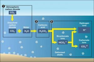 Carbonic Acid ocean