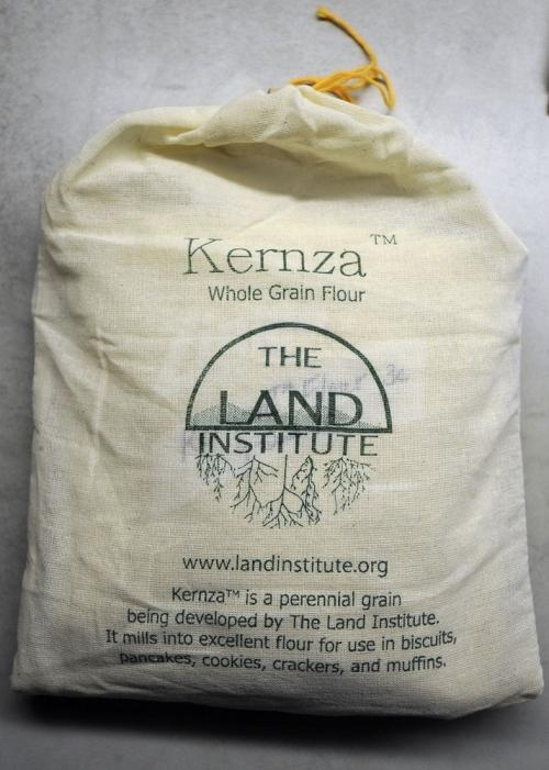 Kernza wheat