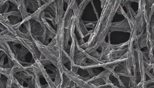 wood_fibers