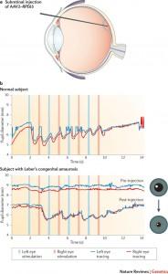 CHOP retinal degeneration adenovirus