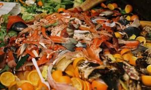 Food-waste_466