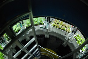 Atrium growing system view 1