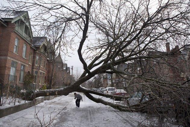 Toronto ice storm fallen tree