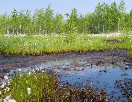 land-based oil spills