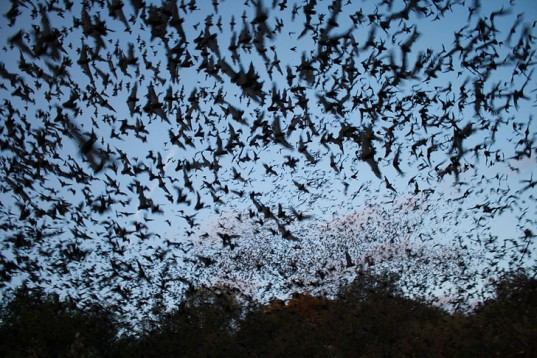 Bats-USFWS-Headquarters-537x358
