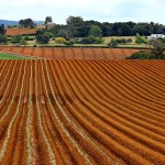 Agriculture Update: The Economic Impact on Farmland by Climate Change
