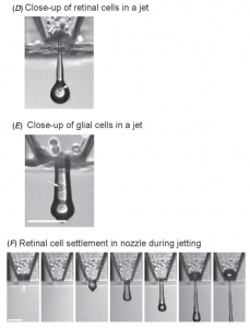 printing retinal cells with inkjet printer