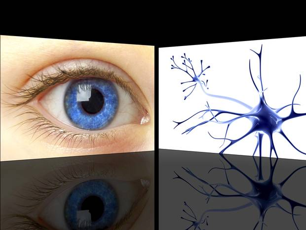 web-eye-cells-getty-c-dontusegain