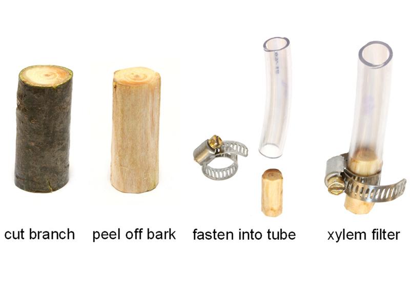 Xylem filter