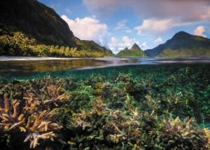 American Samoa coral reefs