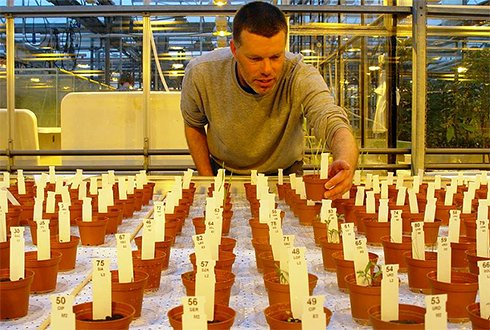 Growing plants on Mars