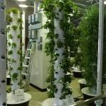 Jeg ble bedt om å bidra med en Abstract til en kommende konferanse Den Vertical Farming og dens fremtid