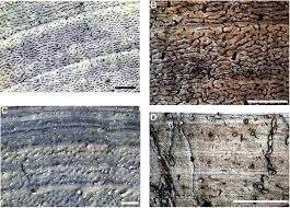 growth rings in various species of dinosaur