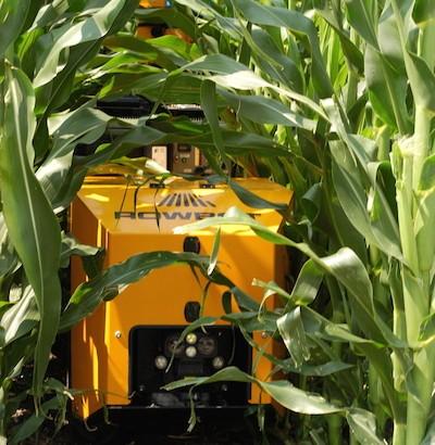 Rowbot Corn