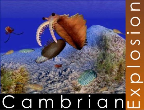Cambrian Dog Food