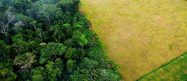deforestation-agriculture