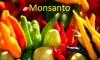 Monsanto GMO crops