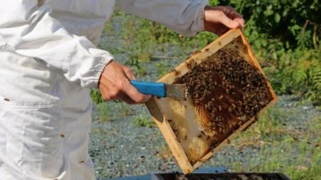 Canadian honeybees