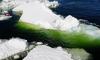 Algae blooms in Antarctic ice