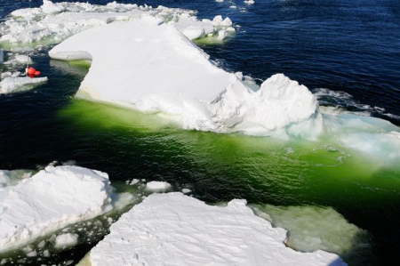 Byproducts of Antarctic ice bergs act as a natural carbon ... Водоросли Png
