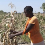 Necessity Overcoming Unscientific Fears in GMO African Debate