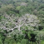 Rainforests May Save Us from Ourselves as They Adapt to Climate Change