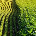 14 Year Study of Genetically Modified Soybean and Corn (Maize) Yields Interesting Results