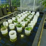 Guess What? Earthworms Can Survive in Martian Soil